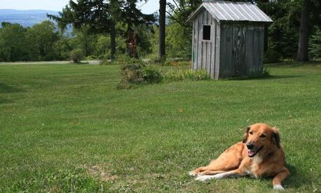 Sarah's dog Coby.