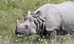 There is no scientific evidence to suggest that rhino horn is medicinal to humans in any way.