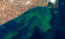 This NASA satellite photo shows algae blooms swirling on Lake Erie.
