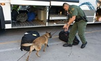 A Customs and Border Patrol agent examines a vehicle at the border of Mexico and the United States.