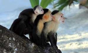"""Sometimes, calming the """"monkey mind"""" is easier said than done."""