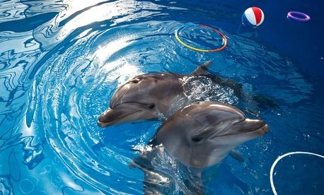 Dolphins play, at the Sevastopol State Oceanarium in Sevastopol, Crimea, Sunday, March 30, 2014.