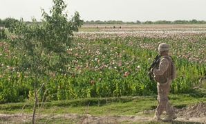 A U.S. Marine patrols a poppy field in the Helmand province of Afghanistan.