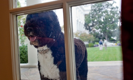 The president can always walk his own dog, Bo.