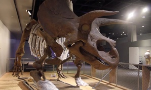 The NMNH new dinosaur exhibit is recently opened.