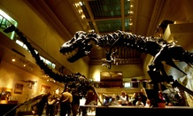 The Dinosaur Hall is one of the main exhibits at the the Smithsonian's National Museum of Natural History.