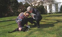 Hillary Clinton's name has been familiar since she was residing in the White House with her husband Bill and their cat Socks in the 1990s.