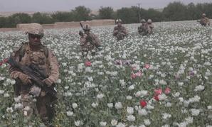 Marines patrol in a poppy field in Afghanistan in 2012.