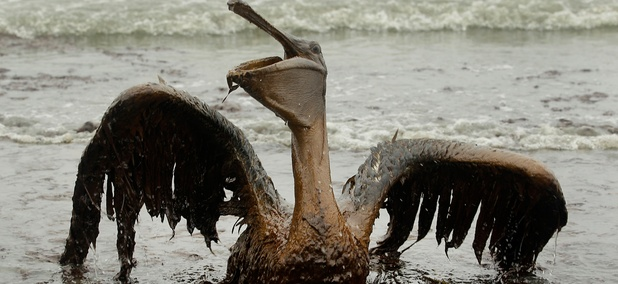 A brown pelican covered in oil sits on the beach in Louisiana in 2010 after the spill.