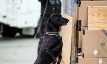 One complaint involved an incident with a GS-12 canine explosive detection handler.