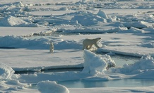 A polar bear and her cub walk along ice floes in the Arctic Circle in 2005.