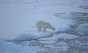 A polar bear stands on sea ice in Alaska's Beaufort Sea in 2010.