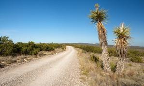 The desert landscape near Carlsbad, New Mexico.
