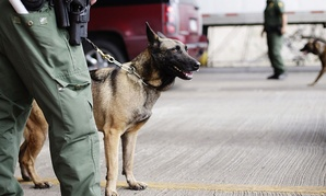 U.S. Customs and Border Patrol agents and K-9 security dogs keep watch at a checkpoint station, on Feb. 22, 2013, in Falfurrias, Texas.