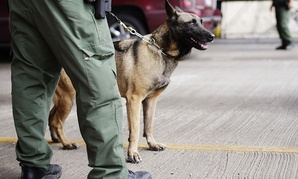 U.S. Customs and Border Patrol agents and K-9 security dogs keep watch at a checkpoint station in Falfurrias, Texas.