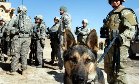 Euro the dog with civilian handler Mike Wilcox, right, attached to the 293rd Military Police Company are preparing for an operation in southern Afghanistan.