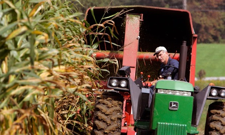 Dr. Sam Simon chops corn on his dairy farm outside Hyde Park, N.Y.