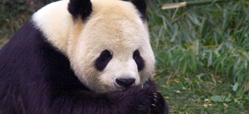 Pandas at the National Zoo would still get fed, but the park would be closed to the public.