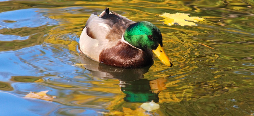 Raising fees for duck hunters is one of the ideas proposed.