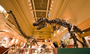 The Dinosaur Hall at the Smithsonian's Museum of Natural History.