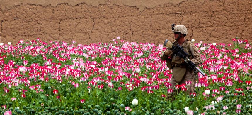 A marine patrols a poppy field in Sangin, Afghanistan.