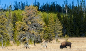 Parts of Yellowstone National Park are among the most quiet in the United States.