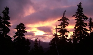 Sunset in Olympic National Forest in Washington state.