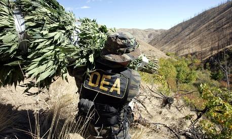 A Drug Enforcement Administration agent shoulders a bundle of marijuana plants down a steep slope  in 2005.