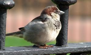 A bird hangs out in Lafayette Park, Washington, DC.