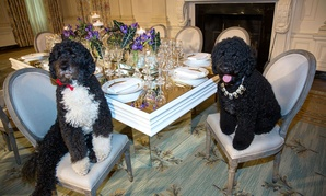 Obama family dogs Bo and Sunny were among the popular photo subjects during the first day with cameras allowed on White House tours.