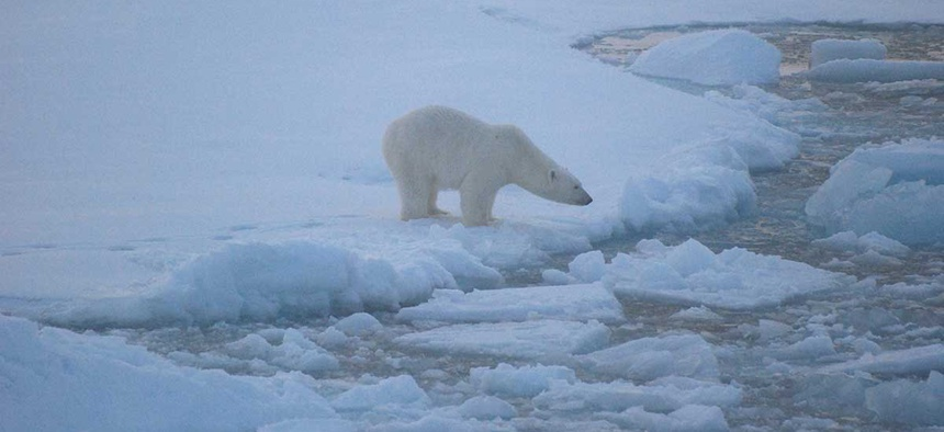 A polar bear stands on sea ice in Alaska's Beaufort Sea in 2010.