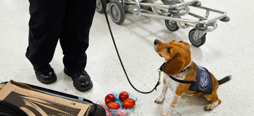 An agricultural canine team spots contraband food at the Miami International Airport in 2012.