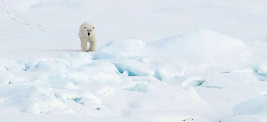 A polar bear walks in Alaska in 2007.