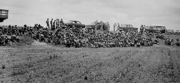 Border Patrol officers detaining immigrants in a field after a few local raids in 1954.