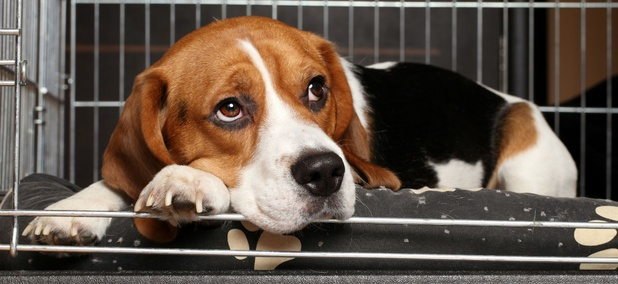 Families can earn up to $1,300 for miscellaneous expenses such as pet relocation.