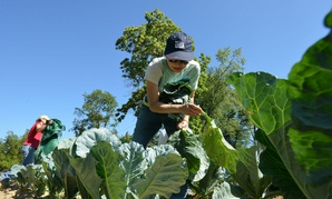 Economic Research Service employee Dina Li is shown volunteering at a farm in Clinton, Md., in this 2015 photo.