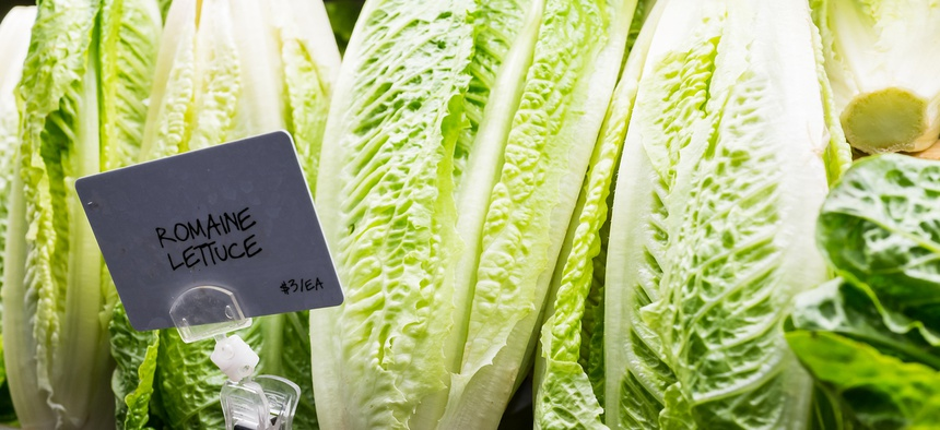 Last year's E. coli contamination was largely due to tainted romaine lettuce.