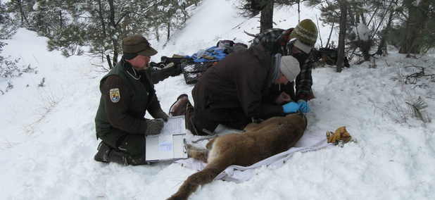 Ongoing wildlife studies are one kind of federally funded research that's sidelined during a shutdown.