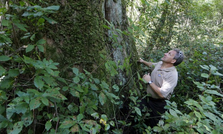 The Interior Department plans to relocate employees to be closer to public lands predominately in the West. Above, Chris Lowie, refuge manager Great Dismal Swamp National Wildlife Refuge, surveys a rare large cypress tree in Suffolk, Va., in 2017.