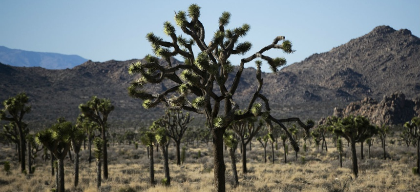 Joshua Tree National Park was one of the parks the Trump administration kept open during the shutdown.